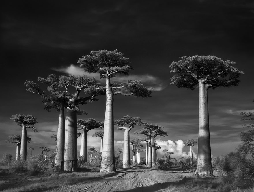 ancient-trees-beth-moon-1